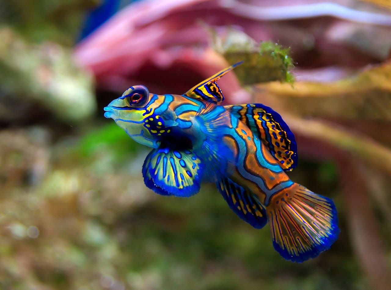Singapore Tropical Fish Singapore Aquarium Tips